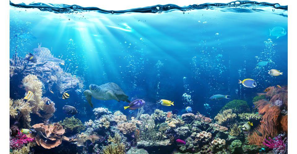 Aquarium à Brest