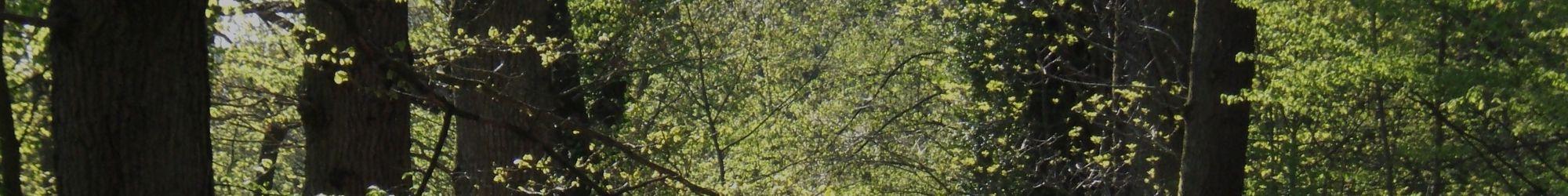 Forêt près de Loudéac